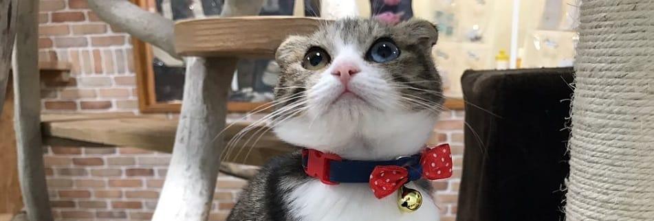 キャットフード、ドッグフード、無添加で安心のおすすめ国産プレミアムフードの通販 猫スペースきぶん屋 × 健康習慣
